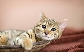 Cat in bed wallpaper Animal wallpapers