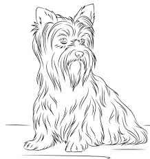 Click To See Printable Version Of Yorkshire Terrier Coloring Page