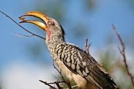 African Birds Photo Photos Photograph