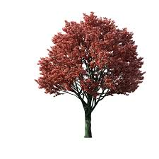 Tree Clipart Flaming Autumn Maple Tree 1024—