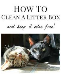 Cat Litter Carpet by Essential Oils To Help With Litter Box Smells Or Carpet Powder No