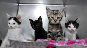 service cats cats billions of animals annually study finds abc news