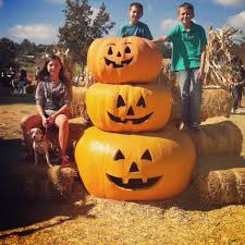 Pumpkin Patch With Petting Zoo Las Vegas by Adventures Of A Semper Fi Family Pumpkin Patch Fall Bucket List