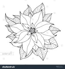 Stock Vector Poinsettia Isolated Flower Vintage Artwork Black White Coloring Book Page Free Printable Pages Legend