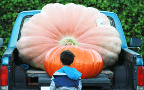 Atlantic Giant Pumpkin Record by Giant Pumpkin Jpg