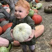 Tapia Brothers Pumpkin Patch by Tapia Bros 327 Photos U0026 139 Reviews Fruits U0026 Veggies 5251