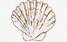 Seashell Pectinidae Drawing Mollusc Shell Clip Art