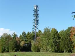Cell phone tower cleverly disguised to look like an evergreen tree Located in New Hampshire