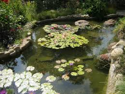 Pond Supplies, Fish Food, Filters, Pumps, UV Sterilizers, Plumbing ... Beautiful This Is The Design I Would Pick Just Fill In Fresh Ideas Fish Pond Design Koi Pictures Sustainable Backyard Farming How To Dig A Raise What Should You Build Ponds And Waterfalls To Make It Diy A Natural Your Institute Of Garnedgingsteishplantsforpond Garden With Waterfall Mini Outdoor Installation Hgtv Picture Home Fniture Ce Pontz Sons Landscape Koi Fish Pond Garden Ideas 2017 Dignforlifes Portfolio Designs Small Backyard Ponds