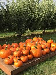 Pumpkin Patch Hammond La by Beilke Family Farm