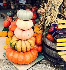 Varieties Of Pie Pumpkins by Types Of Pumpkins Squash And More Assiter Punkin Ranch