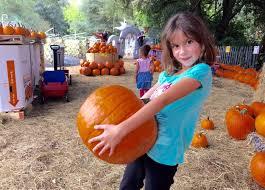 Pumpkin Patch Tampa by 400 Pound Pumpkin Dominates Farm U0027s Patch Tbo Com