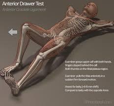 Knee Anterior Drawer Test