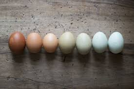 how to tell if eggs have gone bad with fresh egg tests metro news
