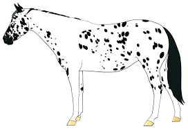 Spirit The Horse Coloring Pages Of Horses F Appaloosa