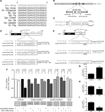 Infrared Lamp Therapy Ppt by Inhibition Of Microrna 146a And Overexpression Of Its Target
