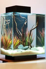 I Love The Look Of Driftwood And The Colours Of The Plants Add To ... How To Set Up An African Cichlid Tank Step By Guide Youtube Aquascaping The Art Of The Planted Aquarium 2013 Nano Pt1 Best 25 Ideas On Pinterest Httpwwwrebellcomimagesaquascaping 430 Best Freshwater Aqua Scape Images Aquascape Equipment Setup Ideas Cool Up 17 About Fish Process 4ft Cave Ridgeline Aquascape A Planted Tank Hidden Forest New Directly After Setting When Dreams Come True