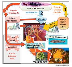 The Tumorigenic Liver Fluke Opisthorchis Viverrini Multiple