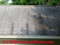 clean algae stains on roofs cleaning prevention of black algae