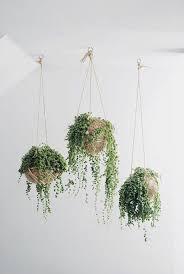 hängende zimmerpflanzen bilder anreizenden