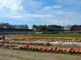 Pumpkin Picking In Ct by Destination Brown U0027s Harvest In Windsor Ct A Delightful Autumn