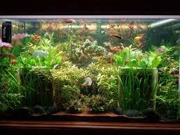 aquarium d eau douce mon aquarium 1000 litres eau douce forum aquarium