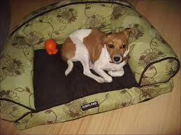 Bowser Dog Beds by Living Rooms Design Reviews On Costco Dog Beds Costco Dog Beds