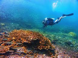 100 Amanpulo Resort Philippines The Is The Best Diving Destination According To
