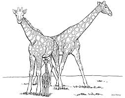 Free Coloring Pages Of Giraffe Drawing
