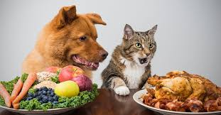 Turkey And Pumpkin For Dog Diarrhea by Dietary Indiscretion Can Cause Diarrhea In Dogs And Cats