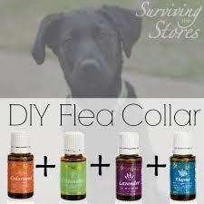 Homemade Flea Powder For Carpet by Essential Oil Carpet Spray For Fleas Carpet Vidalondon