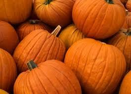 Pumpkin Patch In Long Island New York by Long Island Fall Fun Guide