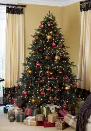 Silver Tip Christmas Tree Los Angeles by Best 25 Silver Fir Ideas On Pinterest Balsam Fir Tree Jet2