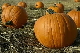 Denver Downs Pumpkin Patch Hours by Colorado Garden Punch List 2016