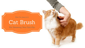Excessive Hair Shedding In Cats by Best Cat Brush For Shedding And Keeping Your Furniture Hair Free