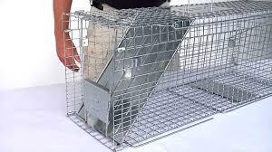 live cat trap how to set havahart feral cat trap model 1099