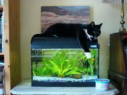 10 gallon aquarium light crypdist
