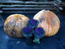 Stoney Ridge Pumpkin Patch Bellingham Wa by Stoney Ridge Farm
