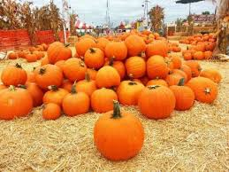 Corona Pumpkin Patch Hours by Ultimate Hb Pumpkin Guide Best Oc Pumpkin Patches And Carving Ideas