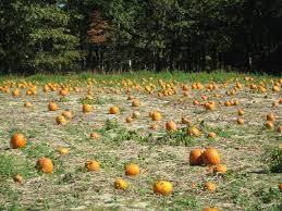 Pumpkin Picking Nj 2015 by Five Local Pick Your Own Spots To Find The Perfect Pumpkin