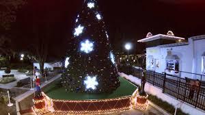 Eustis Christmas Tree Farm by Mount Dora Christmas Tree Drone Youtube