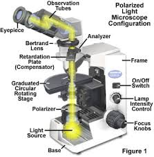 The basic optical and mechanical ponents of a polarized light microscope are illustrated in Figure 1 At a minimum these microscopes must be equipped
