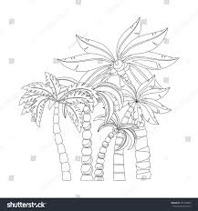 Palm Trees For Coloring Book Pages Design Isolated On White Background Vector Illustration