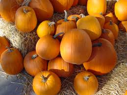 Best Pumpkin Patch Lancaster Pa by Guide To Pumpkin Picking In Ohio I Love Halloween