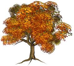 Fall Tree Clipart m=