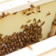 meet the 3 kinds of honey bees in a hive organic gardening