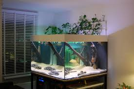 Star Wars Fish Tank Decorations by Best 25 Stingray Tank Ideas On Pinterest Octopus Tank Jack