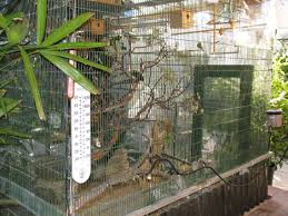 Lady Gouldian Finch Outdoor Aviary Setup | About Lady Gouldian Finches Google Image Result For Httpaussiefinchbreedcomphotogallery Parrot Aviary Outdoor Sale Net Avaries Birds Button Quail Aviary A View From My Summerhouse Macaw And Pigeon Youtube Recent Backyard Chickens Amazoncom Omitree Large Pet Cage Cockatiel Conure The Rescue Report The Old Lady Pigeons Retirement Home Building A Flight Or Coz Amazing 26 Backyard Ideas On Rdcny Best Price On Hotel In Siem Reap Reviews