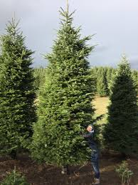 12 Ft Christmas Tree by We Bought A 20 Ft Christmas Tree And Cut It In Half So It Goes