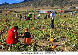 Pumpkin Patch Colorado Springs 2015 by Colorado Agriculture